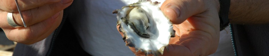 cropped-oyster.jpg
